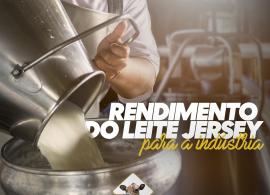 Saiba mais sobre o rendimento do leite da vaca Jersey!