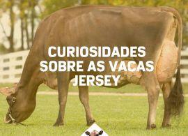 Você sabe tudo sobre a raça Jersey?